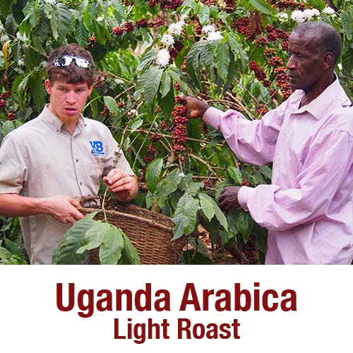 Uganda Arabica Light